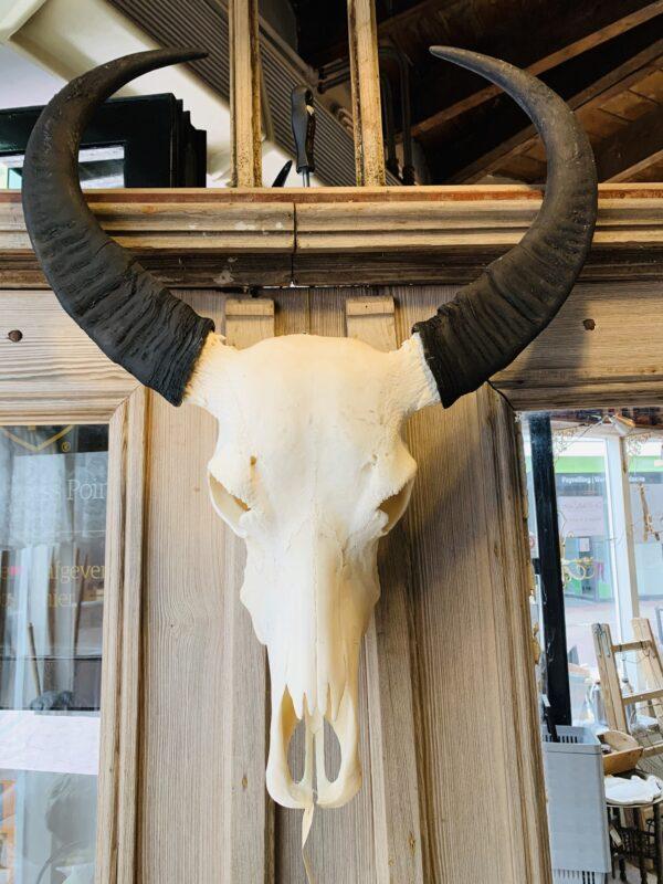 Skull waterbuffel- - De StadsZolder - Winkel - Ontruimingen